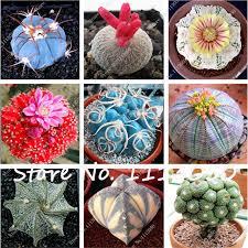 100 pcs mixed cactus seeds indoor multifarious ornamental plants