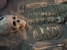 Backyard Skulls Skulls Backyard Zoologist