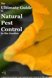 How To Keep Pests Away From Garden - the ultimate guide to natural pest control in the garden