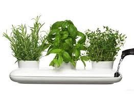 Indoor Herbal Garden 30 Herb Garden Ideas To Spice Up Your Life Garden Lovers Club