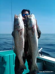 fishing report cape cod fishing charters