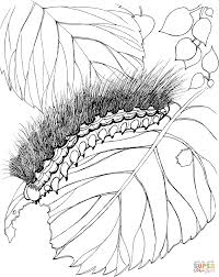 woolly bear moth and caterpillar coloring page free printable