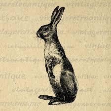 vintage rabbit printable digital rabbit image bunny illustration graphic