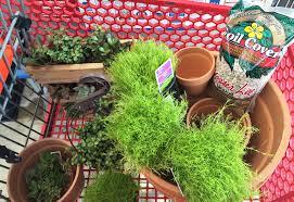 diy make your own fairy garden project nursery