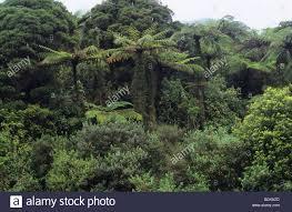 new zealand native plants native plants paparoa national park west coast south island