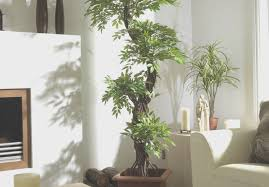 plant silk plants near me top touch me not plant u201a superb outdoor