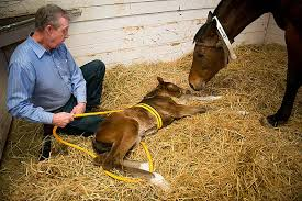 How To Tell If A Horse Is Blind Newborn Horses Give Clues To Autism Uc Davis