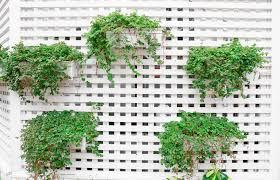 Plants For Winter Window Boxes - garden design garden design with window boxes flower boxes