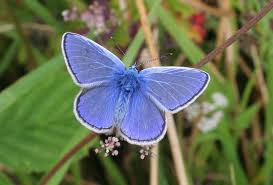 science and dna vindicate vlad the butterfly impaler science buzz