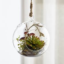 terrariums and supplies crate and barrel