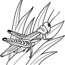 wise owl coloring kids drawing coloring pages marisa