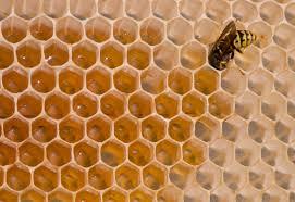 How To Get Rid Of A Beehive In Your Backyard How To Combat Beehive Robbing Blain U0027s Farm U0026 Fleet Blog