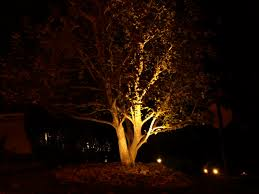 Landscape Tree Lights Landscape Tree Lighting Newsonair With Regard To Landscape Tree