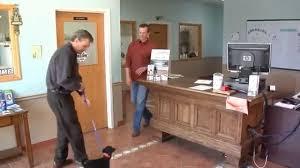 dog day care oswego il dog grooming oswego il cat boarding