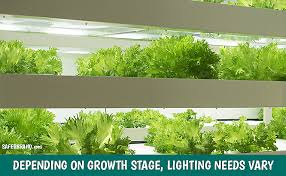 How Much Light Does Your by How To Manage Your Indoor Garden U0027s Dark Cycle