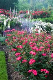 designing a garden with continuous blooms is one of the biggest