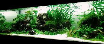 Small Tank Aquascaping Bubbles Aquarium Aquascapes Tank Setups Projects