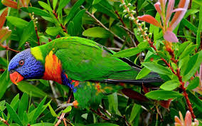 maccow in jungle hd animals and birds wallpapers for mobile and