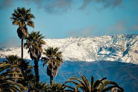 antarctica used to be covered in palm trees says study grist