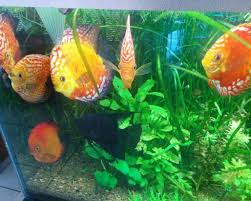 aquarium set up discus com