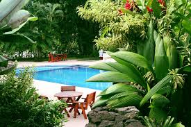 pool landscaping ideas poolside plants pool landscaping ideas from your dallas pool