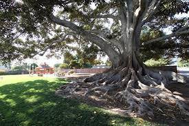 big tree park city of glendora