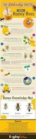 best 25 beehive ideas on pinterest bee hives bee keeping and