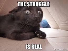 The Struggle Is Real Meme - the struggle is real schitzo cat make a meme