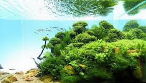 Aga Aquascape Beautiful Aquascaping Photo Collection Quertime