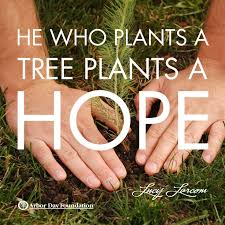 153 best tree nature quotes images on nature quotes