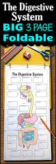 Anatomy And Physiology Coloring Workbook Chapter 16 Answer Key Free Digestive System Worksheet Www Homeschoolgiveaways Com Free