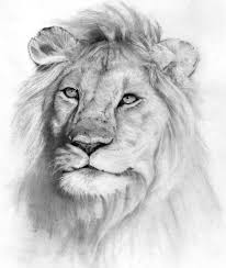 beautiful pencil sketches of animals 1000 images about animal
