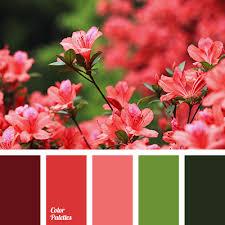 alizarin red color burgundy color color combinations color