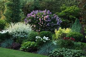 perennial gardens beautiful garden and bedding ideas via