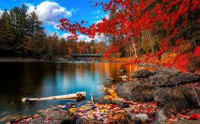 beautiful autumn color red leaves and wonderful lake