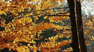 free stock footage leaves autumn fall foliage free footage
