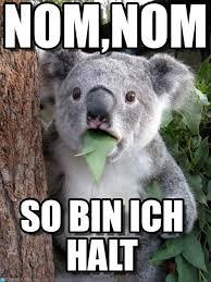 Nom Nom Nom Meme - nom nom surprised coala meme on memegen