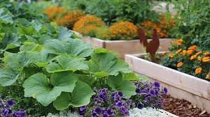 Creative Vegetable Gardens by 17 Creative Vegetable Garden Designs To Inspire Your Garden Revamp