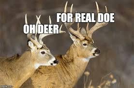 Oh Deer Meme - deer puns imgflip