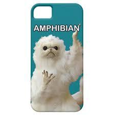 Phone Case Meme - persian cat guardian hibian meme phone case iphone se 5 5s