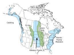 Prairies In World Map by Canada Geese Flyways Us