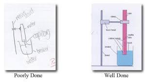 design lab ib biology exle mr covington s science wiki ib biology lab report guide