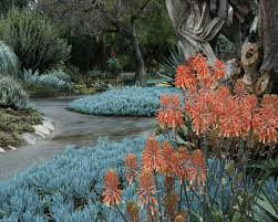 luxury landscaping ideas u0026 trends for las vegas real estate