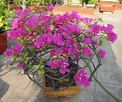 landscape design india decorate your garden with colourful