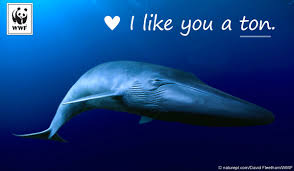 send an ecard send free ecards to your friends and family world wildlife fund