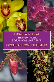 visit the new york botanical garden for the orchid show thailand