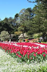 New Zealand Botanical Gardens 8 Best Images About Wellington New Zealand On Pinterest Gardens