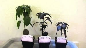 plant grow lights lowes plant grow lights lowes fluorescent grow lights sun system garden