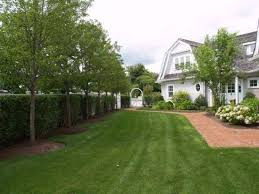Best Trees For Backyard by 36 Best Trees For Screening Images On Pinterest Landscaping