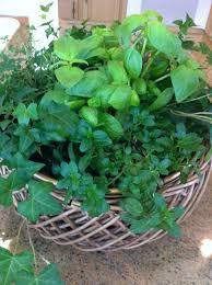 container herb garden planter designs ideas